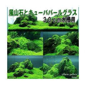 (水草)風山石とキューバパールグラス 30cm水槽用レイアウトセット(無農薬) 本州四国限定