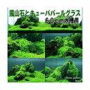 (水草)風山石とキューバパールグラス 60cm水槽用レイアウトセット(無農薬) 熱帯魚 本州四国限定