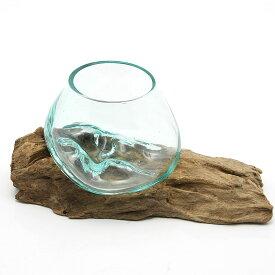 一点物 ラウンドガラス ノーマルXS 流木スタンド付(861179)コケ テラリウム ガラス インテリア 瓶 関東当日便