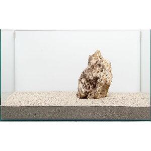 一点物 木化石 親石 60cm水槽用 896508 関東当日便