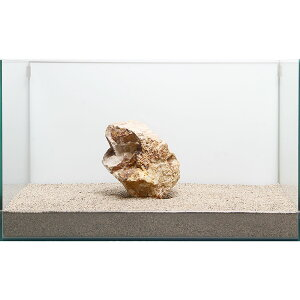 一点物 木化石 親石 60cm水槽用 896517 関東当日便