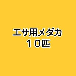 (めだか)生餌 エサ用メダカ/えさ用めだか(10匹)