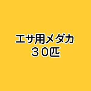 ▼《生餌》エサ用メダカ(30匹)