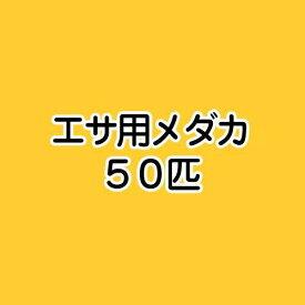 (めだか)生餌 エサ用メダカ/えさ用めだか(50匹)