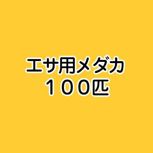 (めだか)生餌 エサ用メダカ/えさ用めだか(100匹)