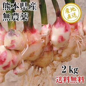 新生姜 無農薬 熊本県産 2kg