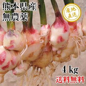新生姜 しょうが 無農薬 4kg 熊本県産 送料無料 新ショウガ