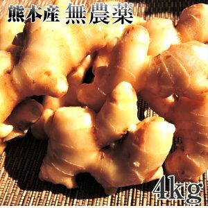 生姜 無農薬 4kg 熊本県産 大生姜 送料無料 しょうが