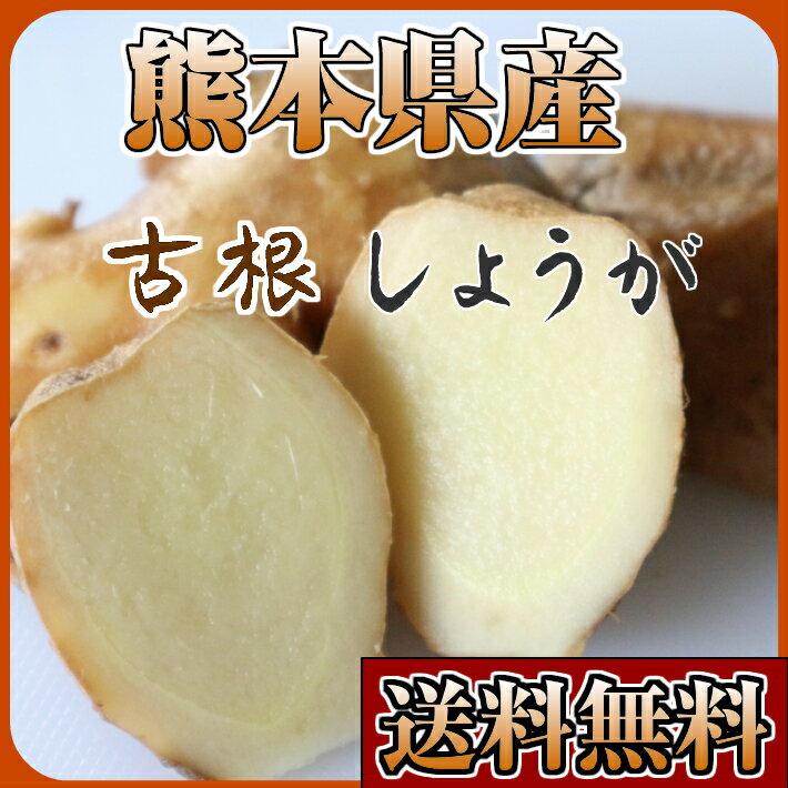 古根しょうが 熊本県産 無農薬 大ショウガ 親ショウガ 2kg 送料無料