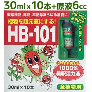 【送料無料】 フローラ HB-101 植物活力剤 30mlアンプル10本&原液6ccセット 希釈タイプ 観葉植物 切り花 園芸 家庭菜園 液体肥料 栄養剤 仏花