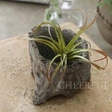 鉢植木鉢多肉植物用サキュレントポット/01アンティーク風巾11×奥行9×高さ9cm