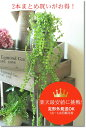 フェイクグリーン インテリア グリーン ハンギング ガーランド グリーンビーン