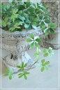鉢 植木鉢 アンティーク ガーデン 雑貨 コベントガーデンハンプトン オールドアーンΦ19×高さ14.5cm 12月4日(金)入荷予定