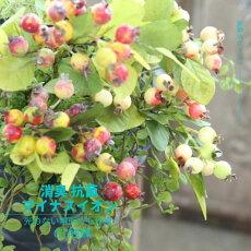 造花消臭ベリー実物リース花材おしゃれインテリアグリーンフェイクグリーンアーティフィシャルフラワーベリーツイック(ブルー)全長72cm/CT触媒