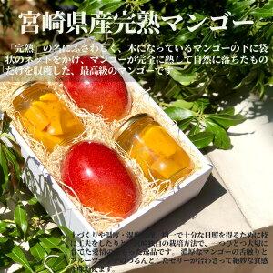 【父の日におすすめ!!】【宮崎県産完熟マンゴー赤秀2L(2玉)と自家製フルーツポンチ(2個)セット】 プレゼント 果物 ゼリー ギフト 母の日 スイーツ フルーツゼリー 記念日