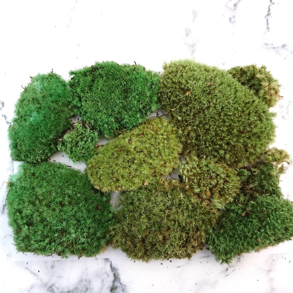【プリザーブドフラワー花材 ヤマゴケプリザ】定形郵便で送料無料 プリザーブドフラワー ちば花プリザ 苔 モス ジオラマの芝として 本物の苔を加工 ヤマゴケ スナゴケ 苔玉プリザ 珍しい 趣味 花 ガーデン