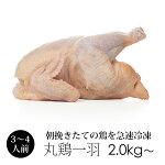 丸鶏(中抜き1羽)紀州うめどり(鶏肉1羽)約2.0kg〜2.8kg[生鳥肉ローストチキンに]