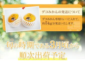 和歌山県産デコポン「紀州デコみかん」5kg【送料無料】不知火=でこぽん【逸品】[WARMJAPAN]