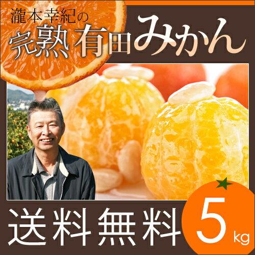 【5kg】【秀品】瀧本農園の高級 有田みかん S・M・Lサイズ 5kg 送料無料 GAP農法を取り入れた独自の酵素栽培でじっくり育てました。