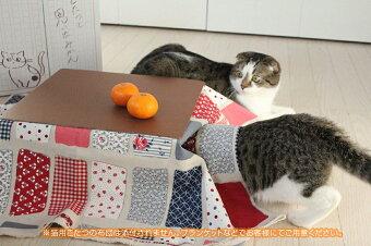 今twitterで話題の『猫と、こたつと、思い出みかん。』日本初!猫専用こたつ付(段ボール製)ミカン5kg入セット保護猫活動地域活性化有田みかん天田みかん土生みかん。ねこ猫こたつみかん