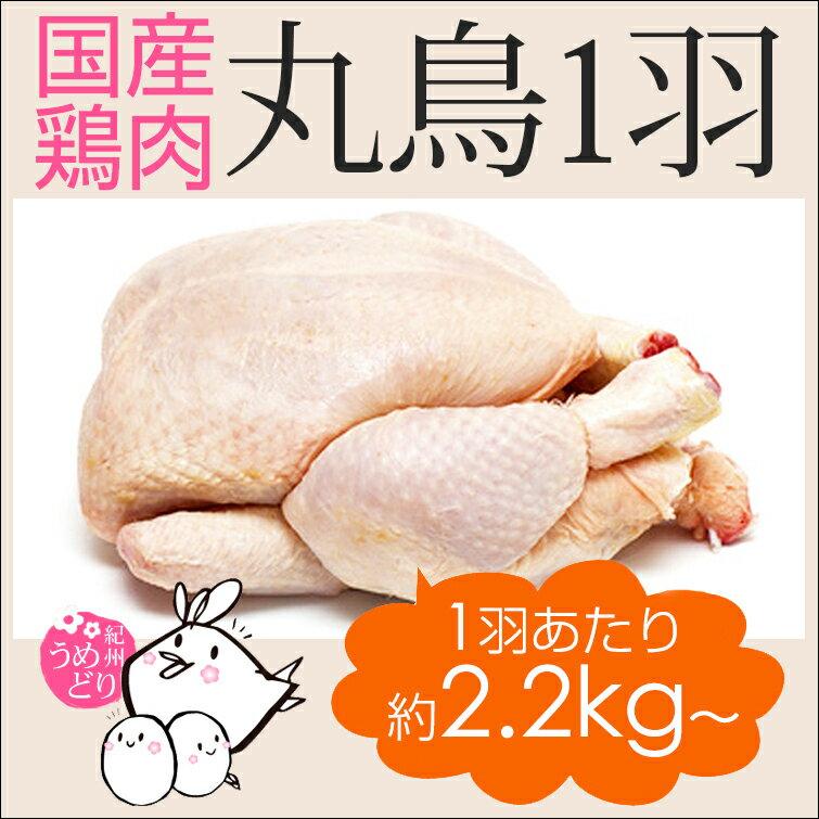 【定期購入】丸鶏 1羽 紀州うめどり (丸鳥1羽 中抜き) 約3-6人前 約2.2kg〜約2.8kg [国産=和歌山県産] 銘柄鶏グリラー(とり肉/鳥肉)