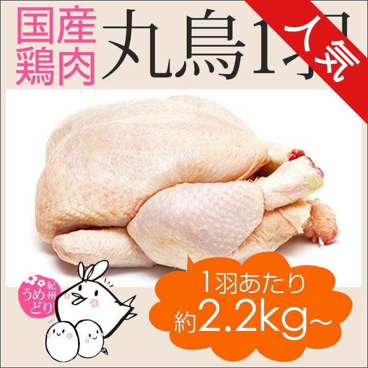 丸鶏 (鶏肉 1羽)【生タイプ 中サイズ】 紀州うめどり[国産=和歌山県産] 約3-6人前 中抜き 1羽 約2.2kg〜約2.8kg 銘柄鶏グリラー (とり肉/鳥肉) ローストチキン で パーティーを華やかに演出! お取り寄せ / 通販 ト体(屠体)