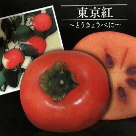 東京紅 大実甘柿の木(オオミアマガキ) 苗木 カキノキ(z3-3)