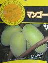 ポポー(ポーポー) 「マンゴー」6号 接木 苗木 果樹 r