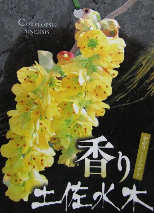 香り土佐水木(カオリトサミズキ) 4.5号苗(i8)