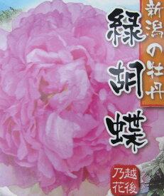 ボタン(牡丹) 苗木 緑胡蝶(リョクコチョウ) 7号苗【43】(w)