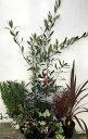 オリーブの木の洋風お庭セット ローズマリー ヘデラ(2個) コプロスマ ハツユキカズラ(2個) ドラセナレッドス…