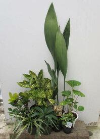 日陰で育つ植物 シェードガーデンセット