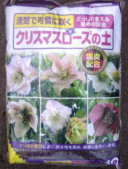 Christmas rose sat 12L×4 individual immigration cases