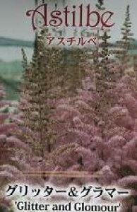 【2種から選べる】アスチルベ 6号苗(i8)