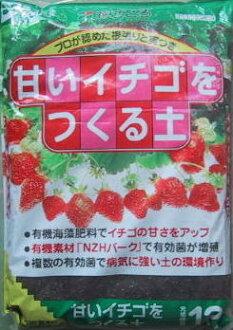 *4 soil 12L case case to make a sweet strawberry