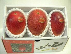 鹿児島完熟マンゴー化粧箱 1kg(2〜3玉)【日付指定不可】【発送は4月中旬以降】