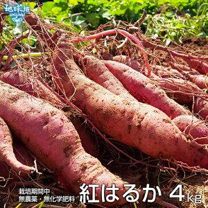 紅はるか 4kg 化学肥料・農薬不使用 鹿児島県産 宮崎県産 土付き さつまいも 薩摩芋 サツマイモ からいも べにはるか 国産 スイートポテト 焼き芋 無農薬