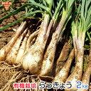 らっきょう 有機栽培 2kg 土付き 鹿児島県産 化学肥料・農薬不使用 国産 JAS認証 大きさおまかせ 冷蔵便 送料無料