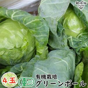 グリーンボール 4玉 有機栽培 冷蔵便 宮崎産 オーガニック 業務用 まとめ買い キャベツ 送料無料