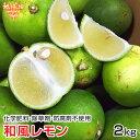 和風レモン 2kg 鹿児島県産 化学肥料・農薬・防腐剤不使用 無農薬 だいだい れもん 檸檬 ノーワックス 国産レモン ス…