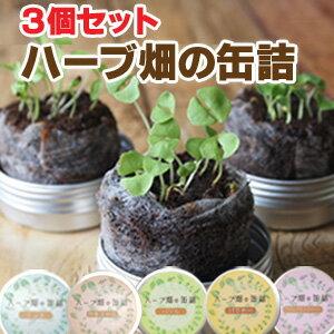 ハーブ畑の缶詰3個 キッチンハーブ 缶 ハーブ 種付き 栽培キット