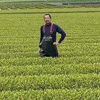 鹿児島茶知覧茶新茶緑茶日本茶