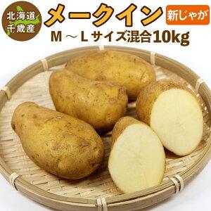北海道産 メークイン 新じゃが M〜2Lサイズ混合 10kg ご予約販売 9月上旬発送 じゃがいも ジャガイモ 送料無料 訳あり