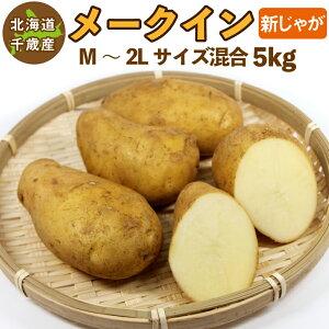 北海道産 メークイン 新じゃが M〜2Lサイズ混合 5kg ご予約販売 9月上旬発送 じゃがいも ジャガイモ 送料無料 訳あり