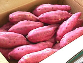 ★ Tosa gold IMO (sweet potato) 5 kg and features your gifts OK rank, luxury products ★