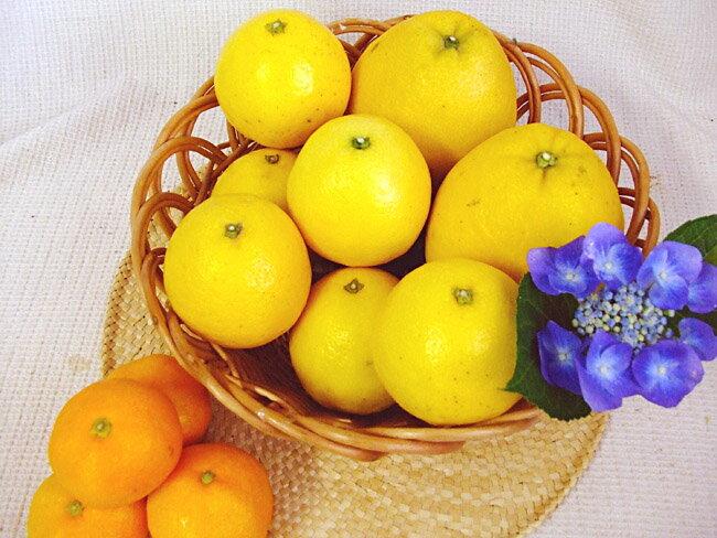 夏のかんきつ(柑橘)セット お味見用小セット ご家庭用 土佐小夏1キロ・夏文旦2玉・ハウスみかん300g 送料無料 ギフト