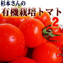 800 tomato sugi05