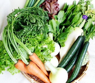 ★ completely pesticide-free vegetables set ★ Kochi [collection] [v] (* is non-re)