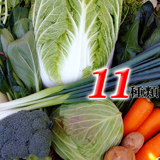 Tosa Shikoku West Japan vegetable juice possible as for the contents news function with the additional function with the assorted fresh vegetables 11 kinds sets Kochi product recipe on the assorted [Qv11] cool delivery service fresh foliage plant root fl