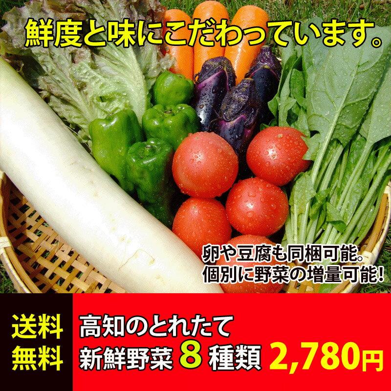 ★送料無料 「とれたて野菜」 8種類セット 高知産 レシピ・追加機能付き ★ [Qv10]